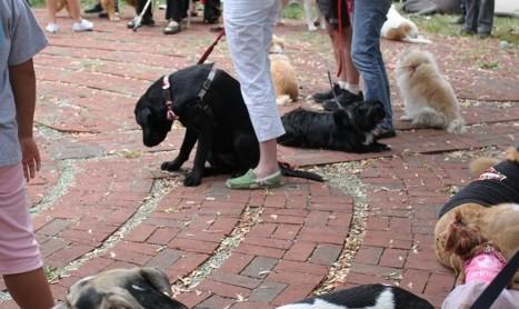 우리가 개에게서 배울점 What we can learn from dogs