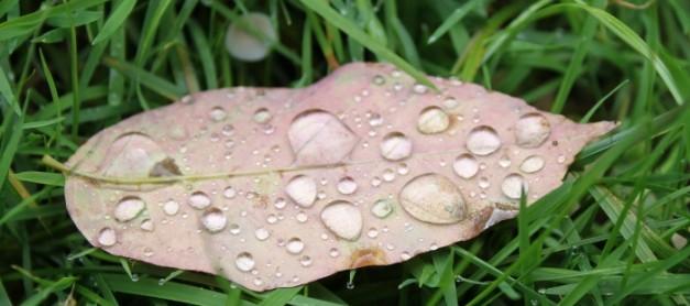 설레이는 가을 단풍 구경갈까.