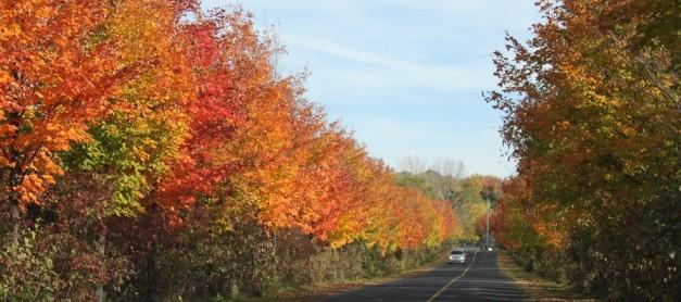 가을 산행, 그리고 전기 자동차의 시대