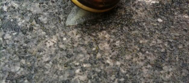 달팽이 똥