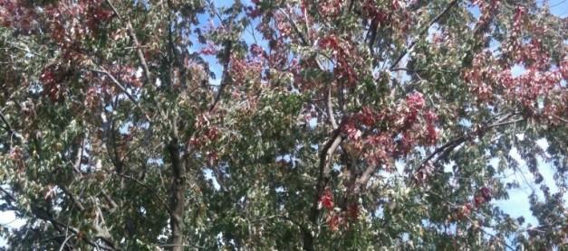 가을 낙엽 털어내기