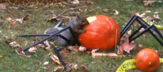 역시 다람쥐가 먹어버리는 할로윈 호박