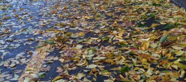 비에 젖은 낙엽(落葉) 신세. 은퇴 남자