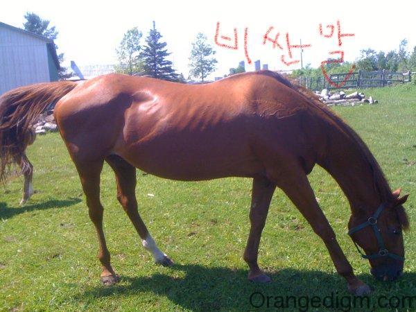 horse406_shop2net