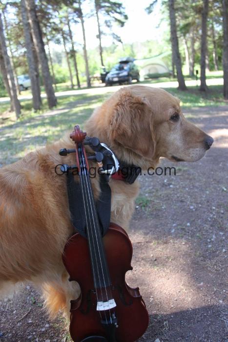 violindog (467x700)
